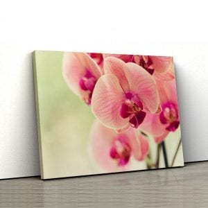 Tablou canvas floral Orhidee roz 1