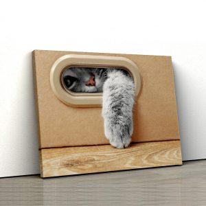 Tablou canvas Animale - Pisica in cutie