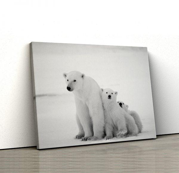 Tablou canvas Animale - Ursi polari