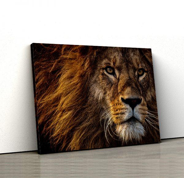 Tablou canvas Animale -Regele Leu