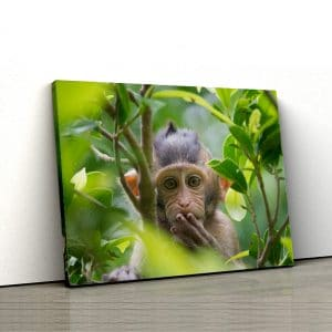 1 tablou canvas maimutica