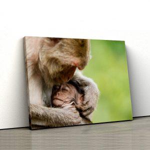 1 tablou canvas Baby maimuta