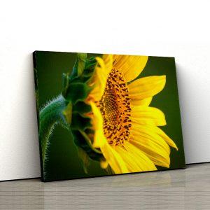 1 tablou canvas Tablou canvas Floral Floarea soarelui in asfintit