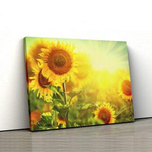 1 tablou canvas Tablou canvas Floral Floarea soarelui in raza soarelui