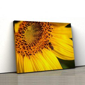 1 tablou canvas Tablou canvas Floral Floarea soarelui si albina