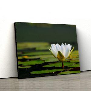 1 tablou canvas Tablou canvas Floral Nufar in apa