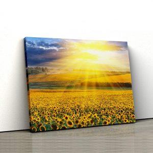 1 tablou canvas Tablou canvas Floral Rasarit in lan de floarea soarelui