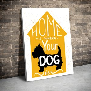 CVS729 Home dog 1